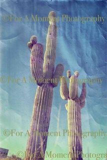 Web cactus 2