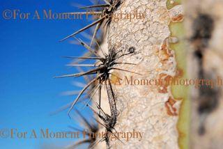 Web cactus