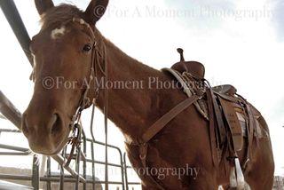 Web horse