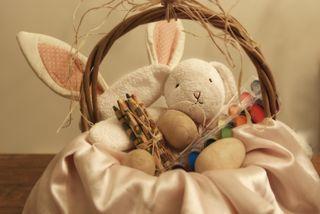 Web bunny