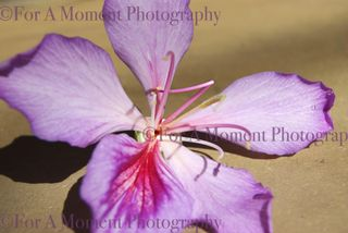 Web flower2