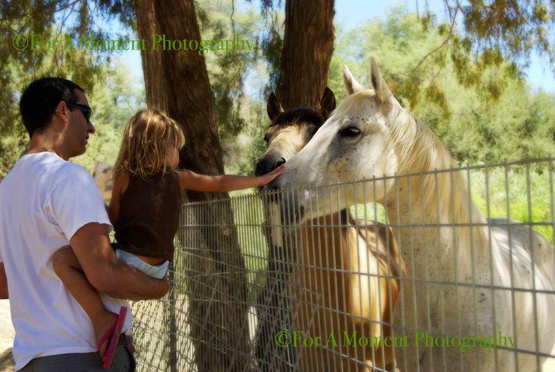 Ww.horses