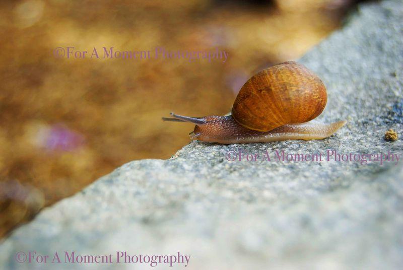 W.snail