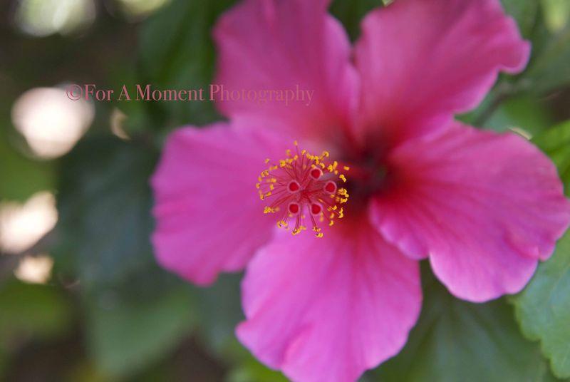W.pink1