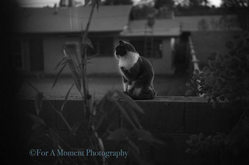 W.cat