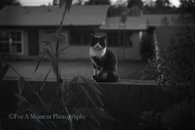 W.cat1