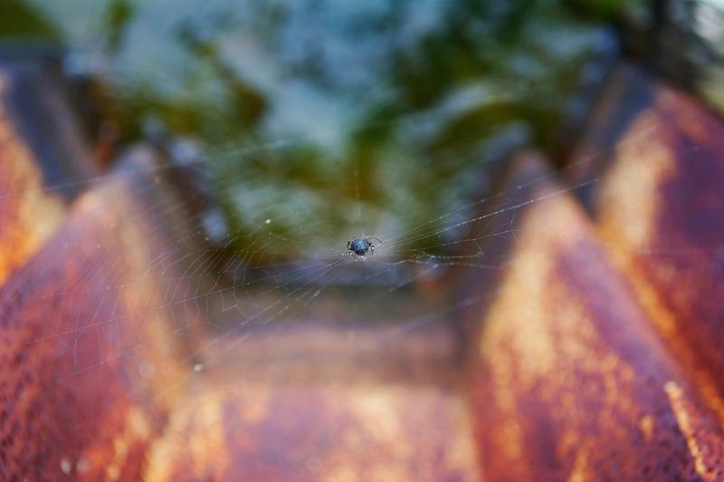 W.spider